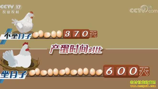 [致富经]林信获新招养鸡蛋中求财