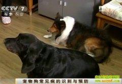 [农广天地]宠物狗常见病的识别与预防