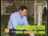 条桑养蚕与自动上蔟技术(20121212)