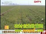 冬小麦高产栽培技术:小麦抗旱田间管理技术