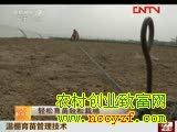棉花种植新技术-温棚育苗管理技术