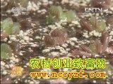常见多浆植物品种及繁殖方法