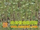 宝冠西瓜栽培技术视频
