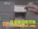 [农广天地养鸟]七彩文鸟养殖技术视频
