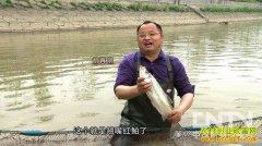 [致富经养鱼]胡再明为了一个心结放弃百万年薪