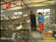 獭兔大肠杆菌病防治技术视频