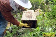 [生财有道]神农架里的养蜂人王玉竹