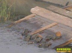 甲鱼养殖场建设方案
