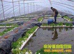 塑料大棚养殖黄鳝技术要点