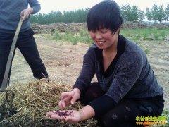 安徽界首牛灵:小蚯蚓带来大效益