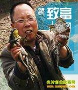 四川刘春军:青蛙王子的养蛙致富传奇