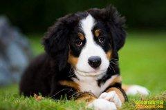 [生财有道]北上养狗创业的狗语者林建迪