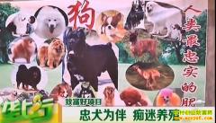 养殖致富项目:忠犬为伴 痴迷养狗