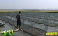 养殖致富项目:黄鳝养殖来致富