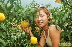 [每日农经]以硬取胜的湖南炎陵黄桃