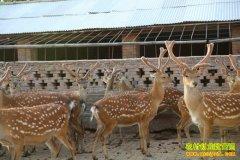 [生财有道]河南郑州周庆伍来之不易的鹿财富