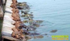 [科技苑]鱼蚌进了甲鱼池