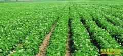 [生财有道]马铃薯种植户景明从土里刨食到土中淘金