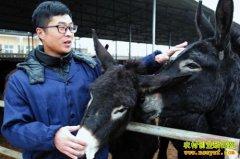 陕西三原刁龙养驴带领乡亲共同致富