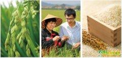 [生财有道]大米姐管延丽生态水稻种植致富经