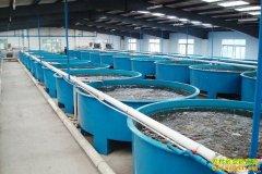 什么是循环水养殖赚钱模式?