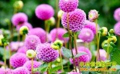 种什么花赚钱:种植盆景花卉前景好