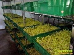 [农广天地]芽苗菜微工厂生产技术视频