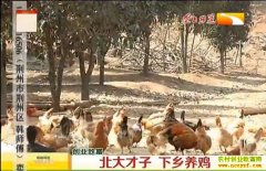 农村致富项目:北大才子张继良养殖桂花香鸡好致富