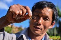 养胡蜂赚钱:张兴良破解胡蜂越冬技术养蜂致富