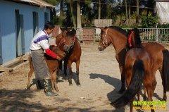养马赚钱吗:养马的成本利润和前景分析