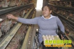 河北沧州残疾女孩张娇娇养鸡创业年入50万