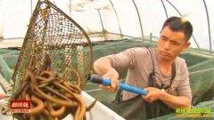 [科技苑]给鳝鱼一个长大个儿的家 王忠华养黄鳝视频