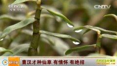 [科技苑]广东高州曹汉才种仙草石斛有绝招