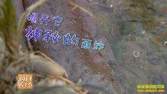 [每日农经]四川兴文坐上缆车的娃娃鱼限量卖好赚钱