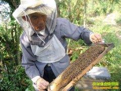 海南海口黄广行养蜂带领14名残疾人致富