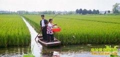 安徽凤台朱振江稻田养殖鳖鱼虾每亩利润1.5万元