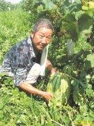 四川泸州王宗贵葡萄园套种西瓜效益高