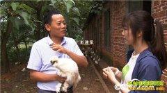 [致富经]江西泰和彭建军养殖泰和乌鸡年入千万元