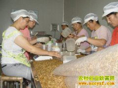山东曹县胡秀杰养殖黄粉虫带动农民致富