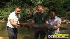 [致富经]四川剑阁李世平养殖娃娃鱼年销3000万元