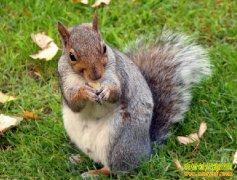 [每日农经]松鼠新宠 人工驯养松鼠前景好