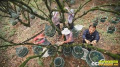 [绿色时空]陕西洛南张鹏养殖飞鼠创业致富视频