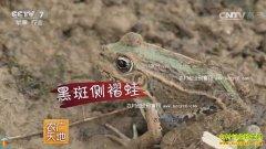 [农广天地]青蛙养殖技术视频:吴传意巧用规律来养青蛙