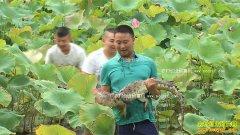 [致富经]四川都江堰鳄鱼疯子徐富荣养鳄鱼年赚百万
