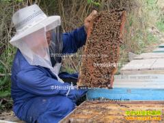 宁夏固原李利平养蜜蜂一箱蜂年收入7800元