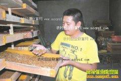 四川三台王国涛返乡养殖黄粉虫一年纯赚五万元