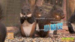 [每日农经]萌宠靠卖萌赚钱 宠物松鼠、羊驼和矮马养殖