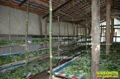 山东郯城徐顺强大棚养蚕种平菇种菜一年效益10万元