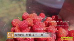 [每日农经]着急的红树莓冻干了卖好赚钱