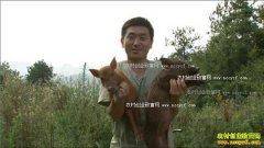 [致富经]湖北巴东邓绍南养殖野猪年卖千万元